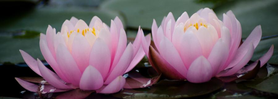 Estetica Lotus